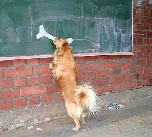 dog-cruelity